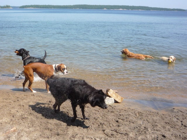 Killbear Provincial Park Dog Friendly